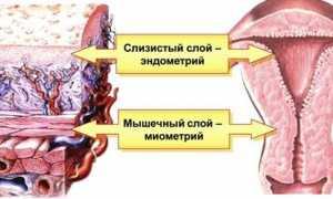 Какой должен быть эндометрий для подсадки эмбрионов