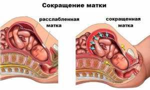 Как часто должен шевелиться ребенок на 23 неделе беременности